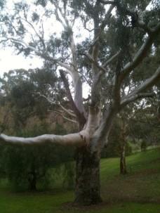 35 yo tree
